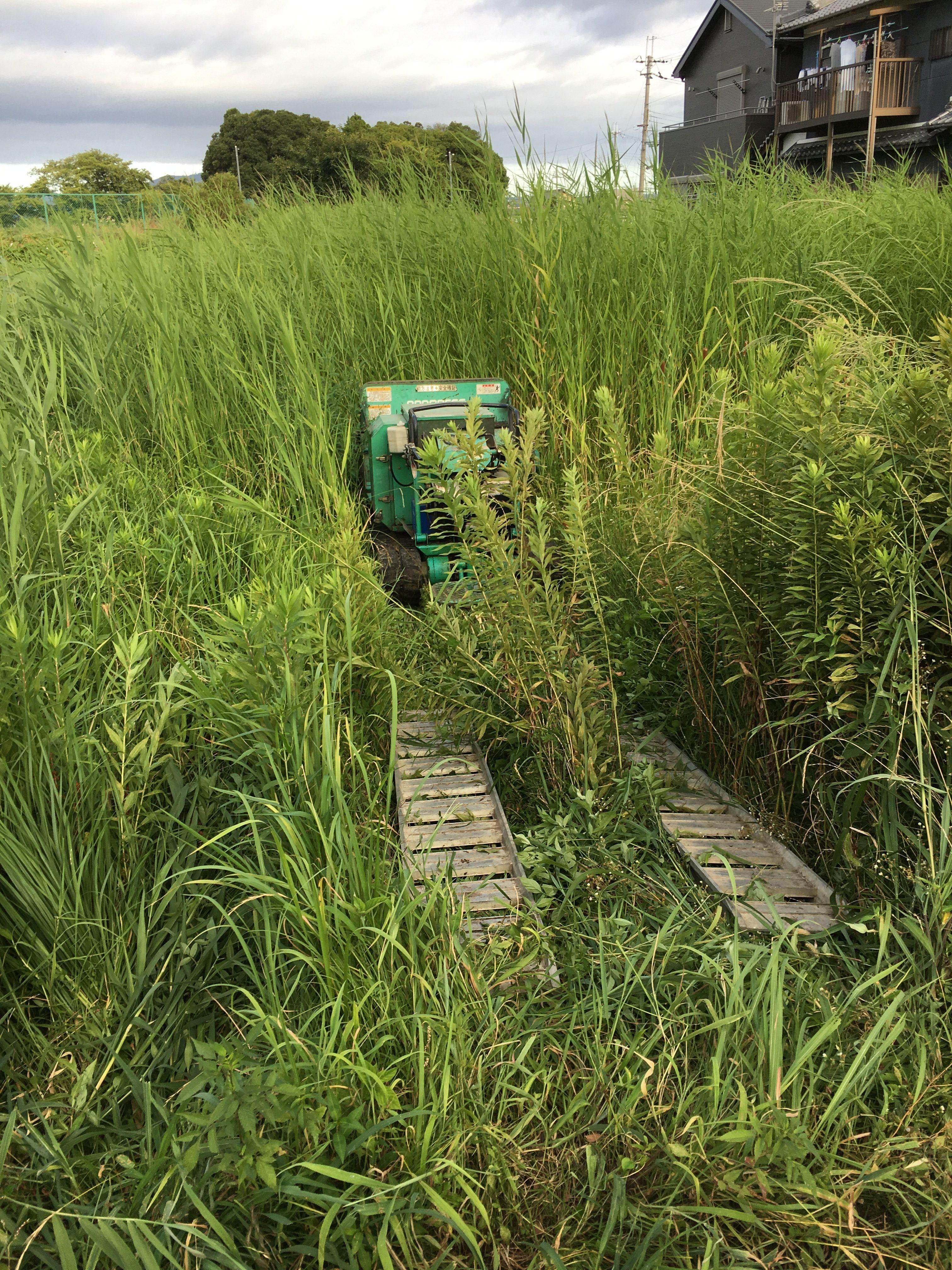 草刈りシーズン